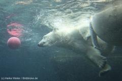 Zoo_Bremerhaven_180515_IMG_4922_9706