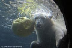 Zoo_Bremerhaven_180515_IMG_4922_9721