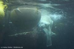 Zoo_Bremerhaven_180515_IMG_4922_9728