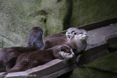 Zoo_Bremerhaven_180515_IMG_5005
