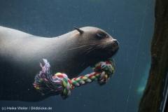 Zoo_Bremerhaven_180515_IMG_5017