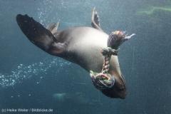 Zoo_Bremerhaven_180515_IMG_5017_9747