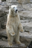 Zoo_am_Meer_Bremerhaven_190514_IMG_4907