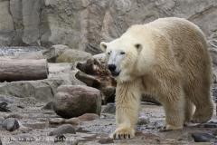 Zoo_am_Meer_Bremerhaven_190514_IMG_8406