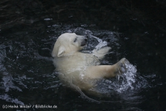 Zoo_am_Meer_Bremerhaven_190514_IMG_8451