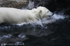 Zoo_am_Meer_Bremerhaven_190514_IMG_8469