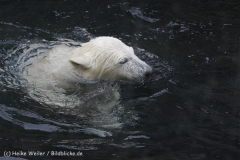 Zoo_am_Meer_Bremerhaven_190514_IMG_8499