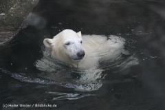 Zoo_am_Meer_Bremerhaven_190514_IMG_8502
