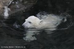 Zoo_am_Meer_Bremerhaven_190514_IMG_8503