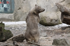 Zoo_am_Meer_Bremerhaven_190514_IMG_8517