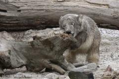 Zoo_am_Meer_Bremerhaven_190514_IMG_8550