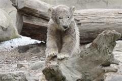 Zoo_am_Meer_Bremerhaven_190514_IMG_8564