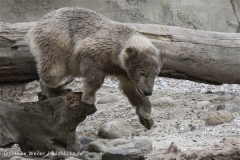 Zoo_am_Meer_Bremerhaven_190514_IMG_8570