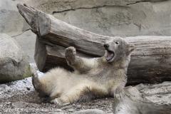 Zoo_am_Meer_Bremerhaven_190514_IMG_8592