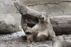 Zoo_am_Meer_Bremerhaven_190514_IMG_8593