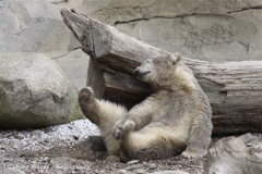 Zoo_am_Meer_Bremerhaven_190514_IMG_8594
