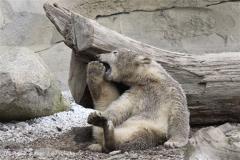 Zoo_am_Meer_Bremerhaven_190514_IMG_8596