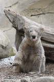 Zoo_am_Meer_Bremerhaven_190514_IMG_8607