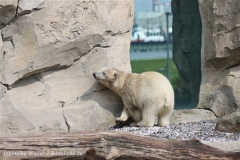 Zoo_am_Meer_Bremerhaven_210714_copy_Heike_Weiler_IMG_2892