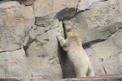 Zoo_am_Meer_Bremerhaven_210714_copy_Heike_Weiler_IMG_2897
