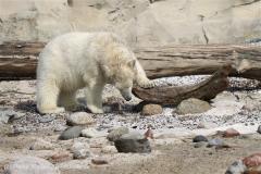 Zoo_am_Meer_Bremerhaven_210714_copy_Heike_Weiler_IMG_2925