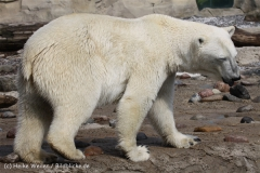Zoo_am_Meer_Bremerhaven_210714_copy_Heike_Weiler_IMG_2944