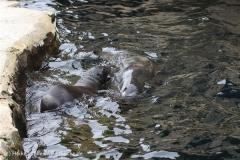 Zoo_am_Meer_Bremerhaven_210714_copy_Heike_Weiler_IMG_3129