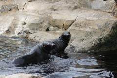 Zoo_am_Meer_Bremerhaven_210714_copy_Heike_Weiler_IMG_3148