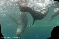 Zoo_am_Meer_Bremerhaven_210714_copy_Heike_Weiler_IMG_3209_5339
