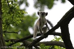 Zoo_Duisburg_280614_IMG_0371