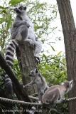 Zoo_Duisburg_280614_IMG_0380