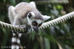 Zoo_Duisburg_280614_IMG_0381