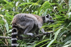 Zoo_Duisburg_280614_IMG_0388
