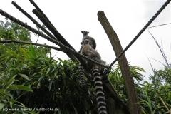 Zoo_Duisburg_280614_IMG_0388_5008