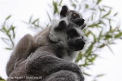 Zoo_Duisburg_280614_IMG_0405