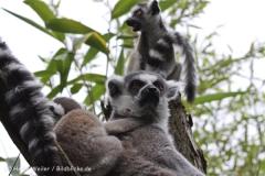 Zoo_Duisburg_280614_IMG_0413