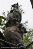 Zoo_Duisburg_280614_IMG_0438