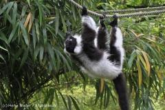 Zoo_Duisburg_280614_IMG_0441