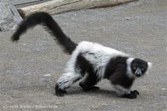 Zoo_Duisburg_280614_IMG_0441_5010