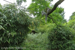 Zoo_Duisburg_280614_IMG_0441_5011