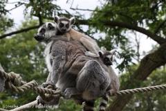 Zoo_Duisburg_280614_IMG_0461