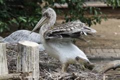 Zoo_Duisburg_280614_IMG_0487
