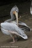 Zoo_Duisburg_280614_IMG_0499