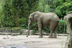 Zoo_Duisburg_280614_IMG_0509_5020