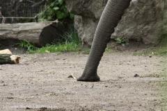 Zoo_Duisburg_280614_IMG_0510