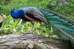 Zoo_Duisburg_280614_IMG_0524_5022