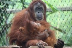 Zoo_Dortmund_100715_IMG_6702