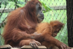 Zoo_Dortmund_100715_IMG_6704