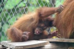 Zoo_Dortmund_100715_IMG_6764