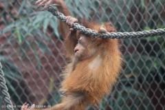 Zoo_Dortmund_100715_IMG_6814